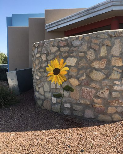 #SunflowersAcrossBurque